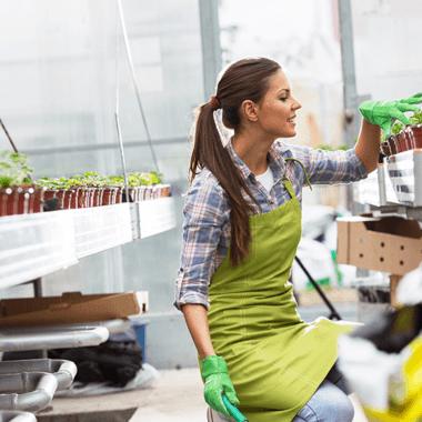 Les OGM et les endives
