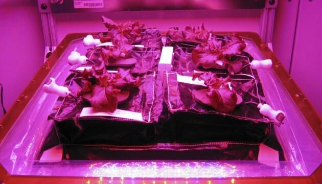 legumes-espace