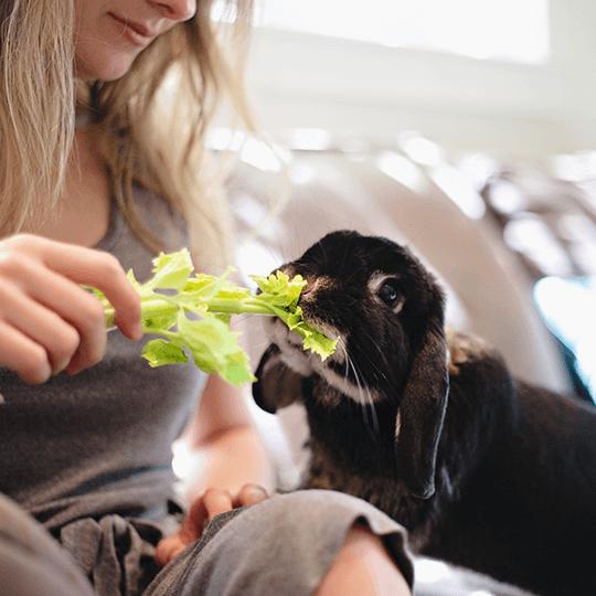 Quels légumes donner à un lapin ou à un cochon d'Inde ?